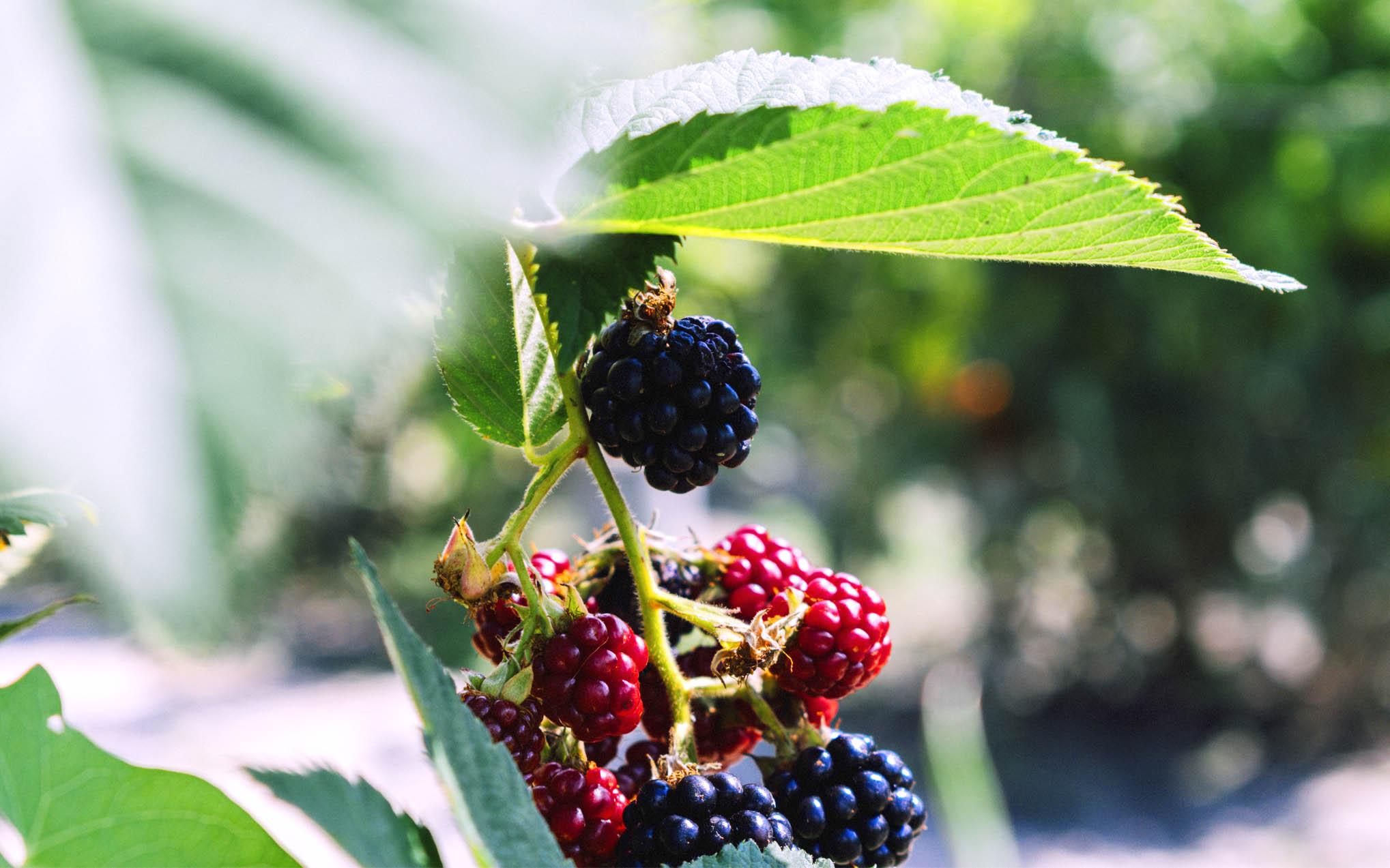 BlackBerry nebude prodávat mobilní telefony srpen
